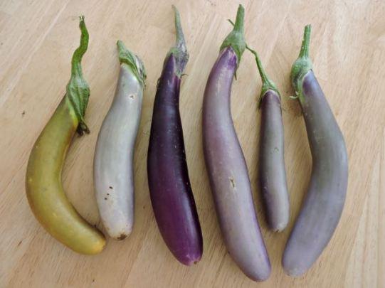 garden-eggplant-color-array-on-table-1