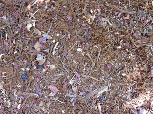 garden-redwood-mulch-and-plum-leaf-mulch-1