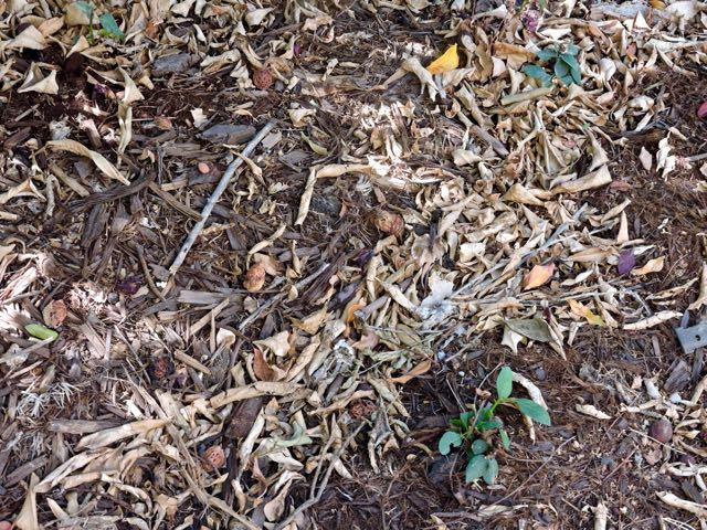 garden-soil-and-leaf-mulch-under-orange-1