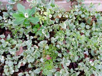 garden-greenery-periwinkle-4-1