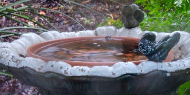 rain-in-birdbath-december-1