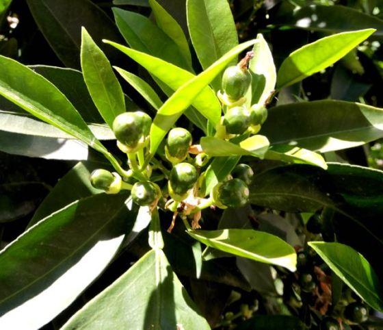 garden new orange fruit april - 1