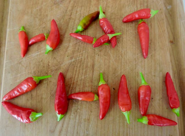 garden kitchen hot chili logo - 1