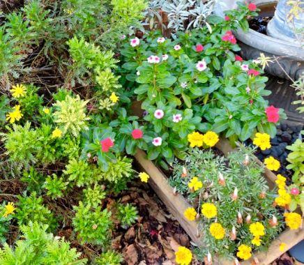 garden back, mid november 17 - 1