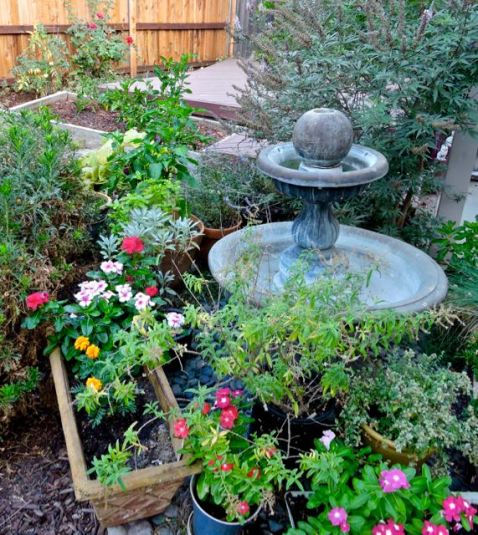 garden vinca herbs peppers etc fountain aug 17 - 1